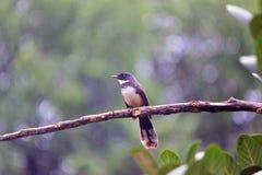 ฺBird na drzewie obrazy stock