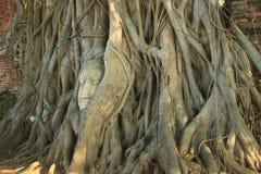 ฺBuddha chez Wat Mahatat Thaïlande Images stock