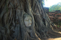 ฺBuddha en Wat Mahatat Tailandia Imagen de archivo