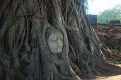 ฺBuddha in Wat Mahatat Thailand Stock Afbeelding
