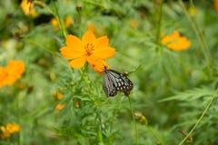 ฺButterflay und Blume Stockfoto