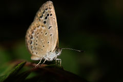 ฺButterfly photos stock