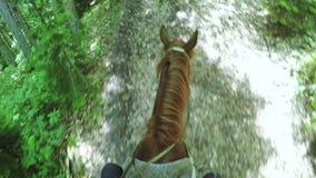 À cheval sur l'été de cheval banque de vidéos