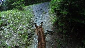 À cheval sur sur le cheval banque de vidéos