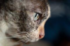 À coté du visage de chat image stock
