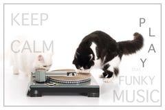 À de mes chats angoras de dindes jouant la musique image libre de droits