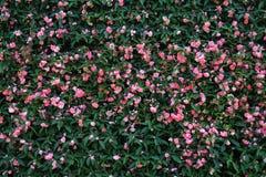 À¸º för blommaväggbakgrund royaltyfri bild