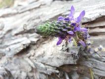 à flor Fotos de Stock
