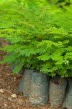 ืjeune arbre vert dans la crèche Photo stock
