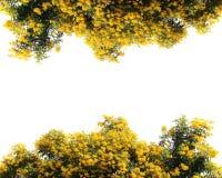 à ¹  kwiatu ściany Żółty ogród, drzewo odizolowywał granicę Obrazy Royalty Free