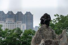 À l'arrière-plan des troglodytes modernes de ville-Chimpanzé-casserole Images libres de droits