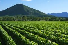 À l'intérieur agricole et champ de ferme Photos stock
