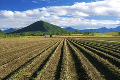 À l'intérieur agricole et champ de ferme Photo libre de droits