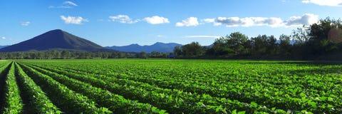 À l'intérieur agricole et champ de ferme Photos libres de droits