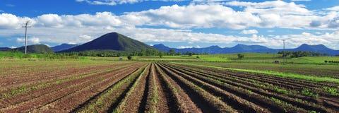 À l'intérieur agricole et champ de ferme Images stock