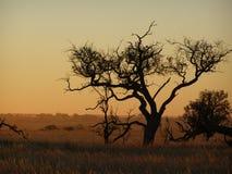 à l'intérieur arbre photos stock