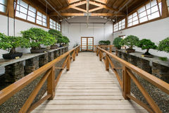 À l'intérieur d'un jardin de bonsaïs Image libre de droits