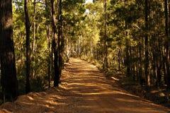 À l'intérieur de la forêt photos stock