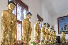À L'INTÉRIEUR DU TEMPLE : OR DEBOUT BUDDHAS Image stock
