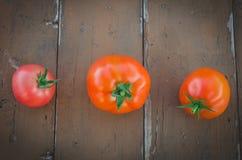 À la distance entre eux trois tomates Photographie stock