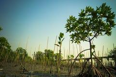 à ¹  mangrovebos Stock Foto's