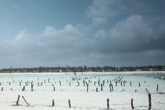 À marée basse à Zanzibar Photo libre de droits