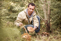 À sélectionner des champignons photographie stock