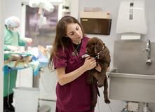 À une pratique vétérinaire occupée Photos libres de droits