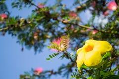 ัyellow kwiat Zdjęcia Royalty Free
