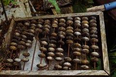 Ábaco de madeira velho foto de stock