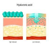 Ácido hialurónico Ácido hialurónico em produtos dos cuidados com a pele ilustração stock