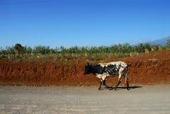África Imagem de Stock Royalty Free