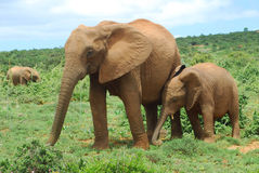 África Imagens de Stock Royalty Free