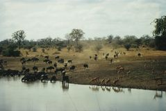 África Fotos de archivo libres de regalías