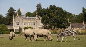 África en el rinoceronte y la cebra de Cotswolds- fotos de archivo