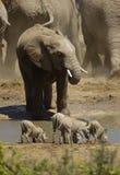 A África a mais selvagem Fotografia de Stock Royalty Free