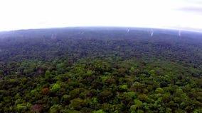 África Selva de la Guinea Ecuatorial Visión desde la vista panorámica almacen de metraje de vídeo