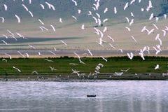 África, Tanzânia, cratera de Ngorongoro Fotos de Stock Royalty Free