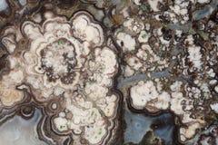 Ágata floral Fotografía de archivo libre de regalías