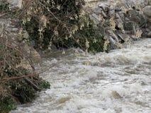 Água alta da angra Imagens de Stock