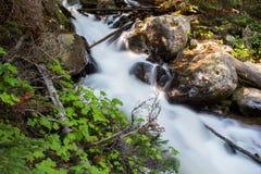 A água apressa-se abaixo de um córrego íngreme da montanha na floresta fotos de stock