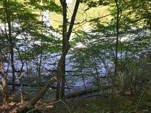 Água através das árvores Imagens de Stock Royalty Free