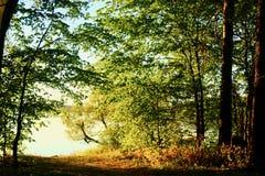 Água azul em um lago da floresta com as árvores do pinho e de vidoeiro fotos de stock