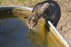 Água bebendo do gato Imagens de Stock