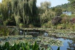 Água bonita Lily Gardens foto de stock