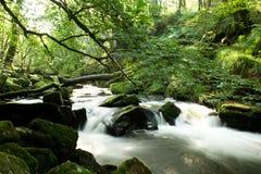 A água cai através das madeiras imagens de stock royalty free