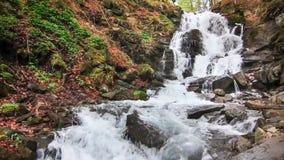 A água cai sobre rochas através do mato denso da samambaia de uma floresta Carpathian video estoque