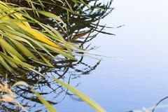 Água calma Fotografia de Stock Royalty Free