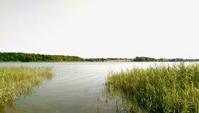 Água cinzenta em um lago da floresta com grama da água fotografia de stock royalty free