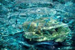 Água claro de turquesa com os peixes azuis pequenos Foto de Stock